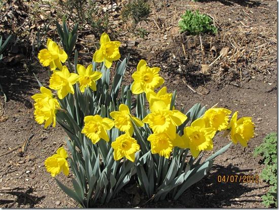 Best-Flowers