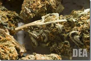 Marijuana-DEA