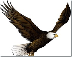 Eagle flying illustration, Color