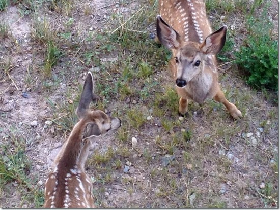 If-Bambi-Could-Talk-1